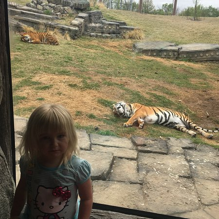 Tulsa Zoo 2018 All You Need to Know Before You Go with Photos
