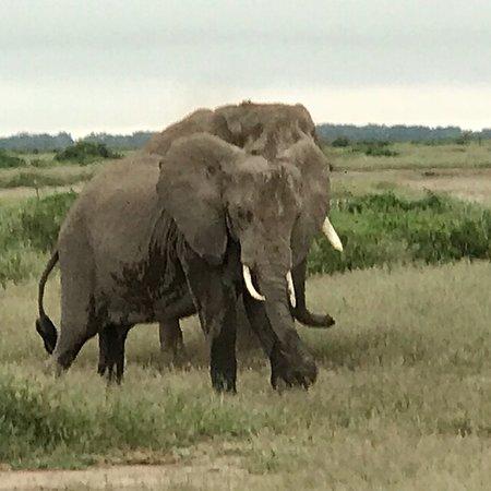 Amboseli National Park, Kenya: photo2.jpg