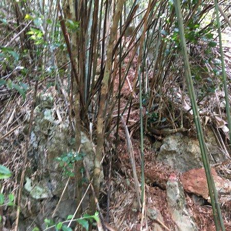 Muang Ngoi Neua, Laos: photo5.jpg
