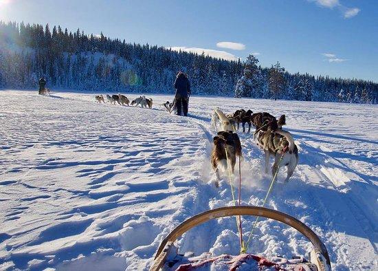Brumunddal, Νορβηγία: Hedmarksvidda Husky