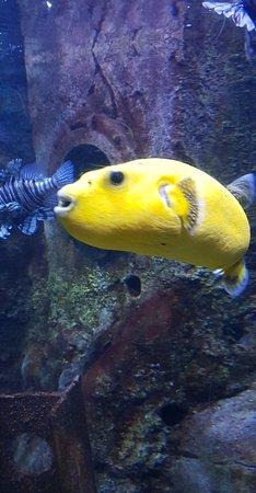 National Sea Life Centre : Snapchat-1718998815_large.jpg