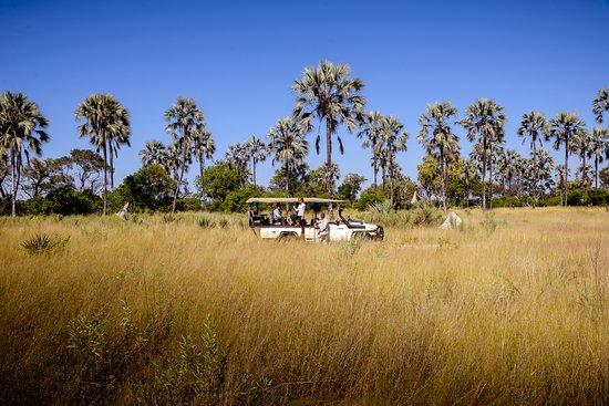 Landscape - Picture of Sanctuary Stanley's Camp, Okavango Delta - Tripadvisor