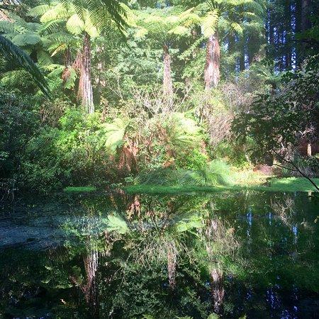 Hamurana, Selandia Baru: photo0.jpg