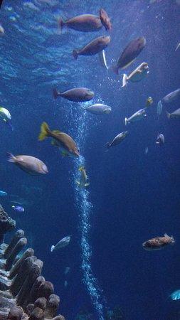 SEA LIFE London Aquarium : tank