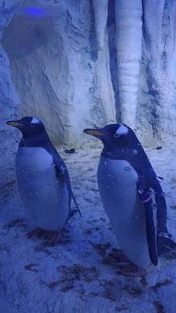 SEA LIFE London Aquarium : penguins