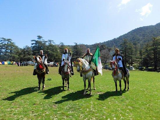 Tissemsilt, Αλγερία: Berbers of arab horses