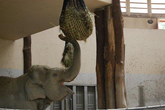 Budapest Zoo & Botanical Garden: Slon