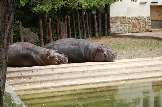 Budapest Zoo & Botanical Garden: Hroch
