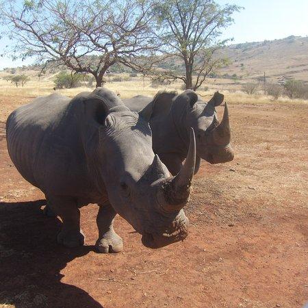 Vryheid, Sudáfrica: Koubad