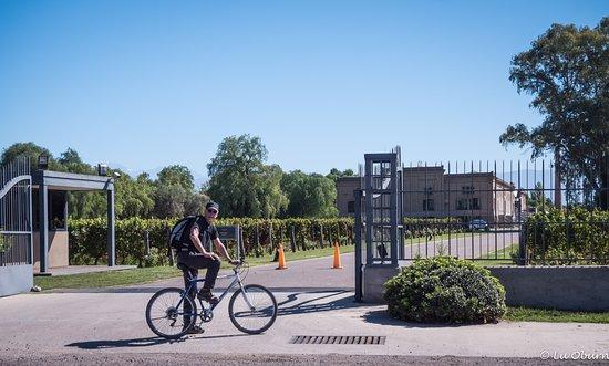 Maipu Bikes: Countryside ride to the vineyards