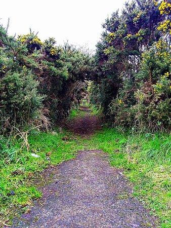 Ballynoe Stone Circle: Start of walk down after gate.