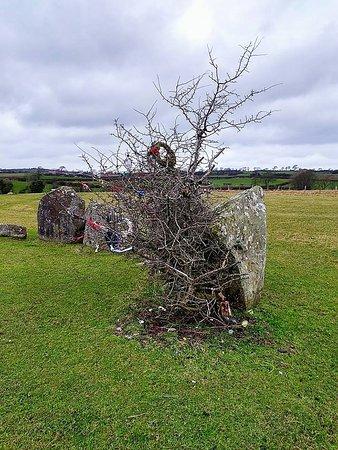 Ballynoe Stone Circle: Hawthorn bush and gifts.