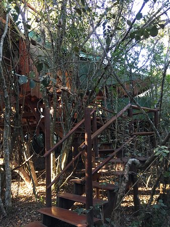 Teniqua Treetops: View of two bedroom treehouse