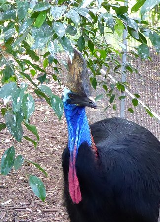 Featherdale Wildlife Park: caosar