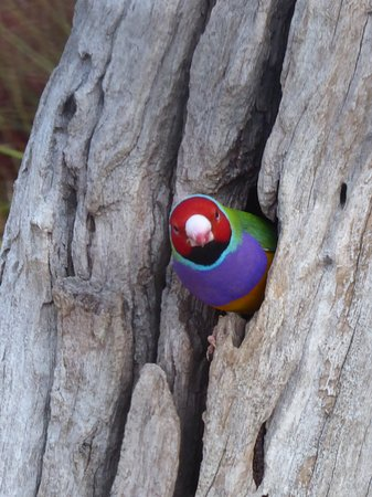Featherdale Wildlife Park: oiseau