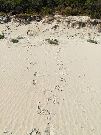 Stokes Bay, Australia: Spuren am Stokes Beach