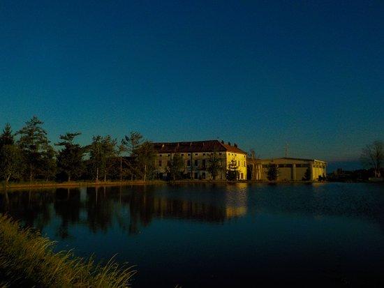 Villanova Biellese, la Fassona: risaie