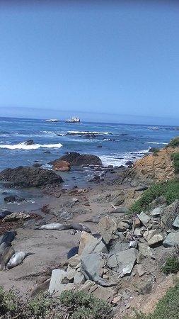 Vacation Rentals Moonstone Beach Cambria Ca