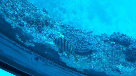 Ashizuri Underwater Aquarium
