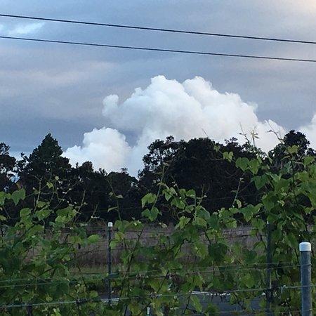 Volcano Winery: photo0.jpg