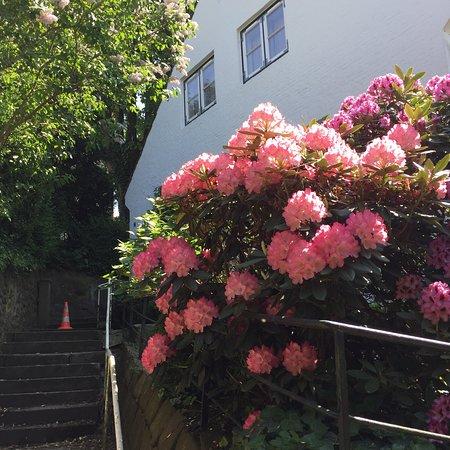 Treppenviertel: photo3.jpg