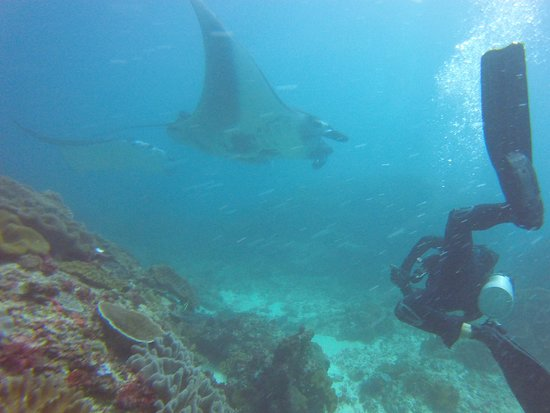 French Kiss Divers: Manta point