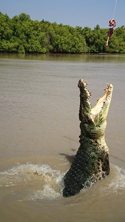Jumping Crocodile & Wildlife Tours