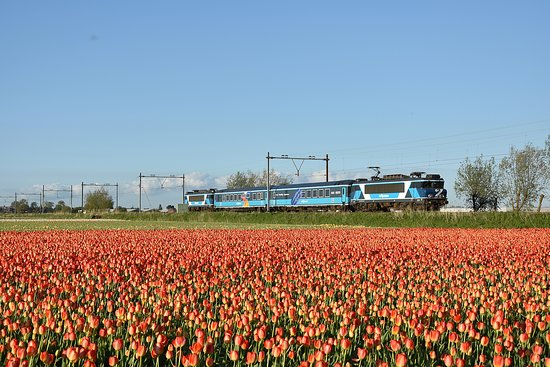 Dinner Train: Tulip fields
