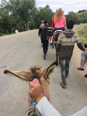 Moulay Idriss, Morocco: We took the trip on the donkey with them