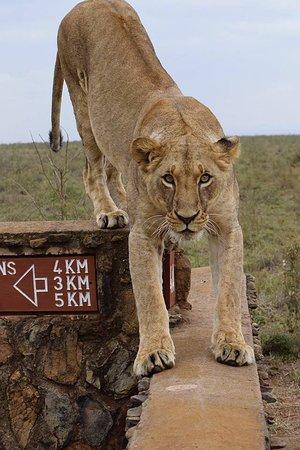 Wasili Kenya Safaris