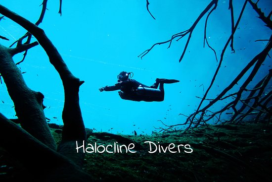 Halocline Divers