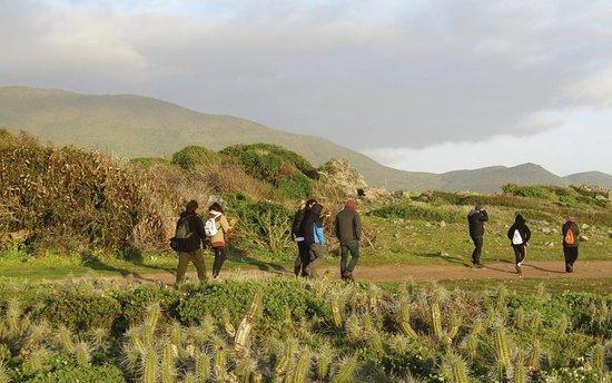Trekking Guiado por Pichidangui y sus sectores