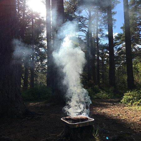 Rothiemurchus Camp and Caravan: photo1.jpg