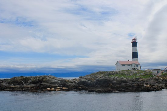 Five Star Whale Watching: Seals, sealions, and a lighthouse