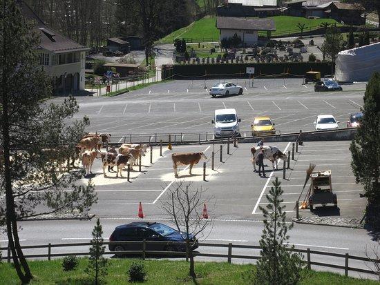 Lauterbrunnen: Для коров парковка бесплатная