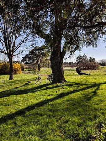 Kelleys Island, Ohio: tree swing