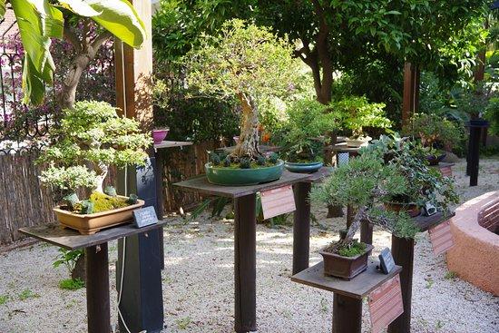 Bonsai Garden Museum