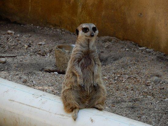 Bilde fra Hopp over linjen: Ardastra Gardens, Zoo & Conservation Center Admission Ticket