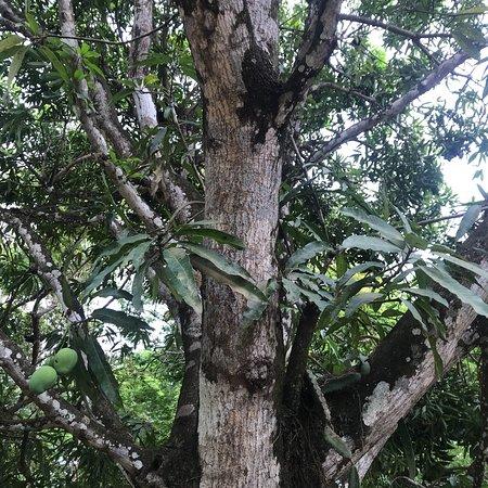 San Juanillo, Costa Rica: photo0.jpg