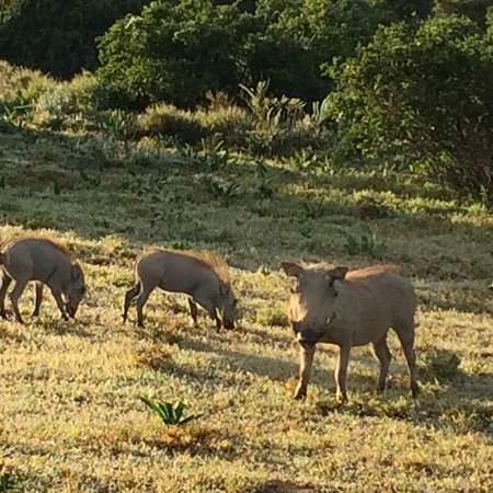 Shamwari Game Reserve, Sudafrica: photo8.jpg