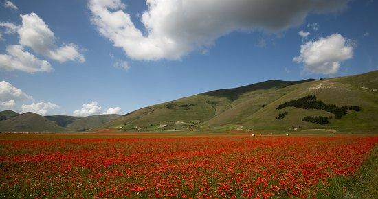 Umbria, Italy: _DSC0045_large.jpg