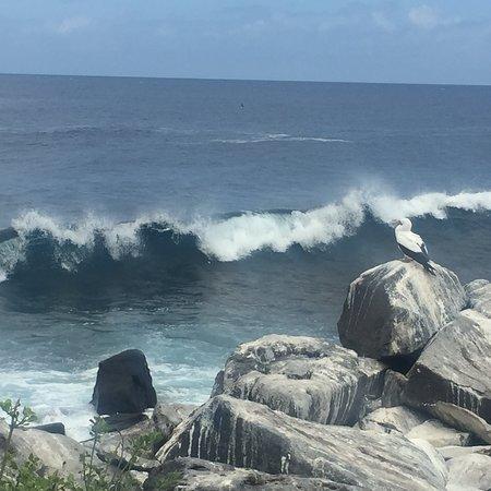 Punta Suarez照片