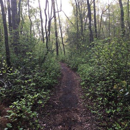 Elmer, Nueva Jersey: Parvin in May