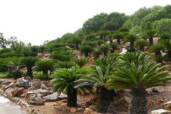Ses Salines, Spain: Botanicactus