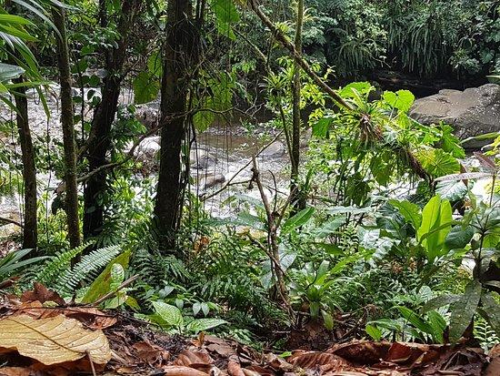 Nationalpark, Guadeloupe: IMG-20180515-WA0011_large.jpg