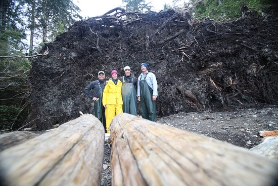 Baranof Fishing Excursions: Tree Root Serves to Protect Dining Area from the Elemnets