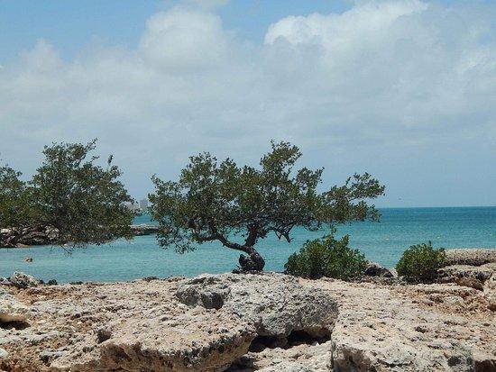 Malmok Beach 사진