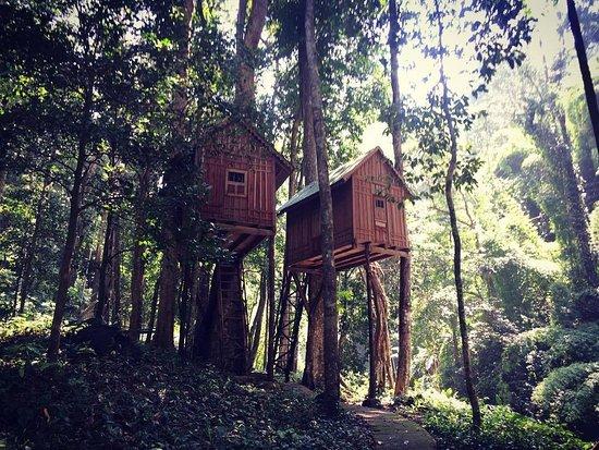 Bao Loc, فيتنام: Dambri Ecological tourist area