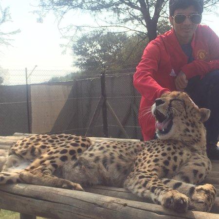 Lion and Safari Park Φωτογραφία