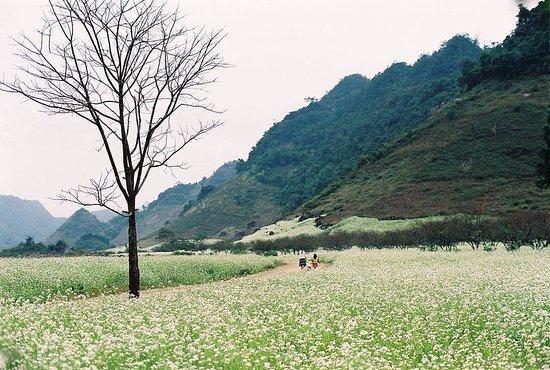 Lai Chau, Vietnam: Buckwheat Flower